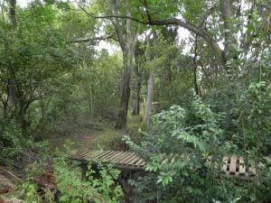 Valley Lodge Gardens Walking Path Bridge